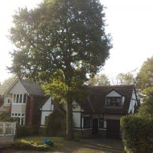 Tree Surgeon Merstham