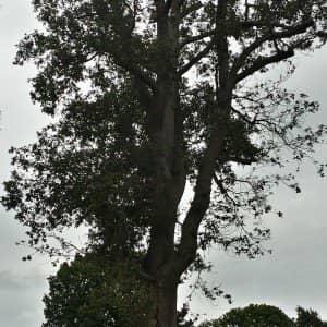 Tree Surgeon Warlingham