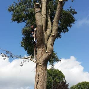 Tree Surgery Limpsfield Chart