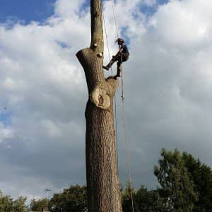 Tree Surgeon Addington