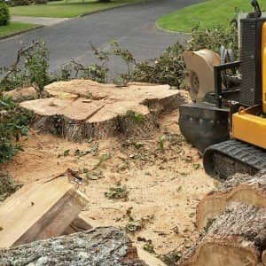 Stump Grinding Caterham