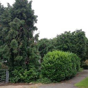 Tree Surgery Limpsfield