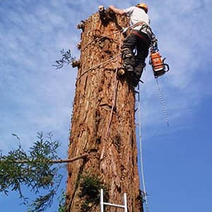 Tree Surgeon Woldingham