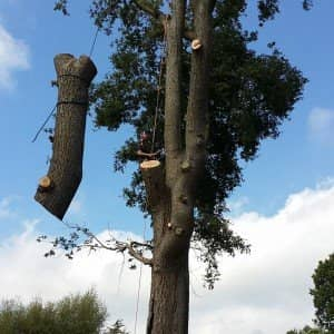 Tree Surgery Crockham Hill