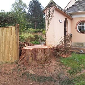 Stump Grinding Purley
